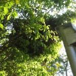 Large bee swarm